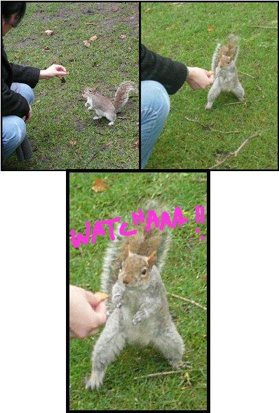 ecureuilmoi