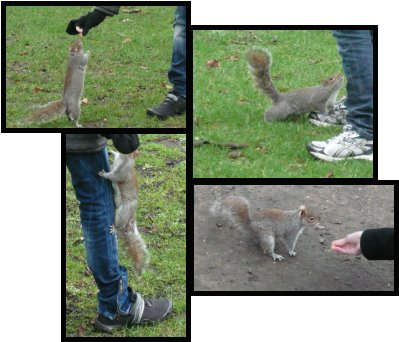 toreation decureuils
